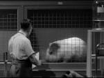 a Jack Arnold Tarantula DVD Review PDVD_008